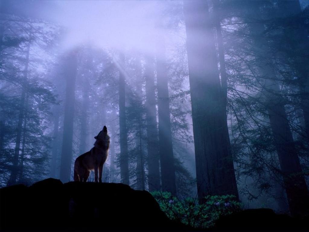wolf_10_big-1
